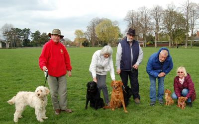 Fun Dog Show comes to Rotary Spring Fair
